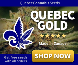 catch half off where to buy 10 Best Cannabis Seed Banks 2019 [Shipping to USA] - 420 Friends